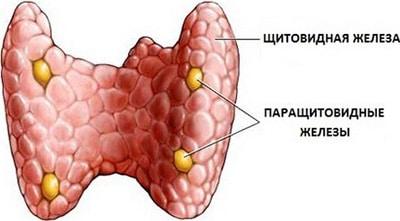гипопаратиреоз диагностика
