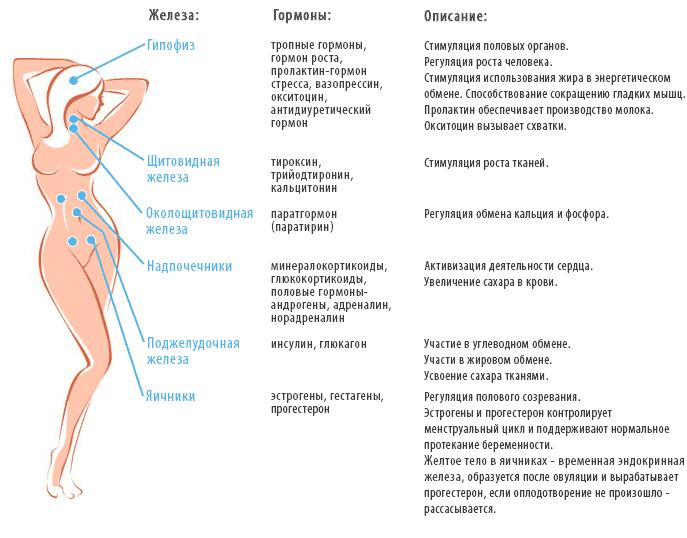 анализ на женские гормоны подготовка