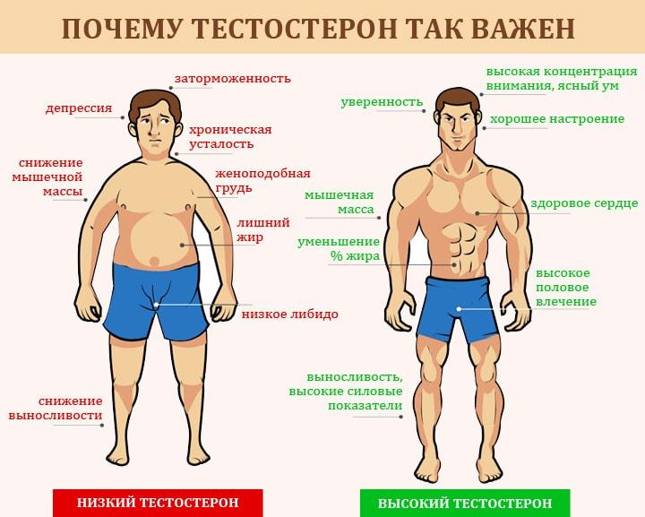 от чего зависит уровень тестостерона