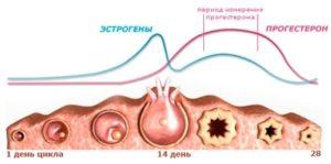 прогестерон подготовка к сдаче анализа