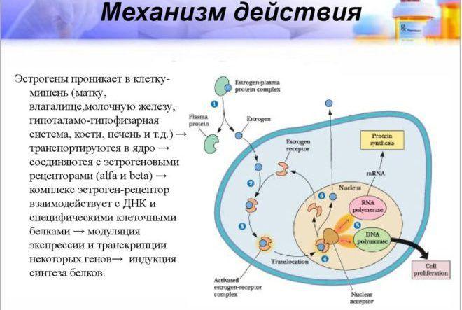 кровь на гормон эстроген