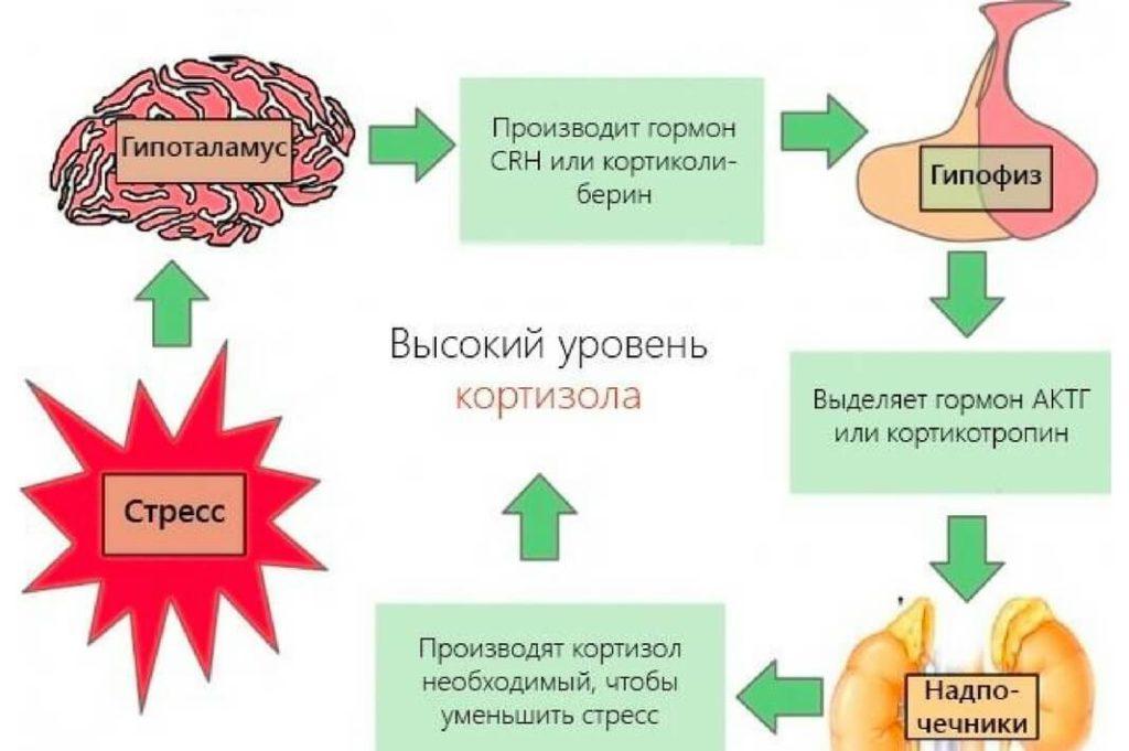 повышение кортизола у женщин