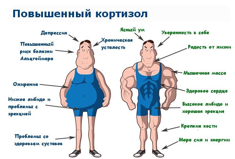 повышение кортизола у мужчин