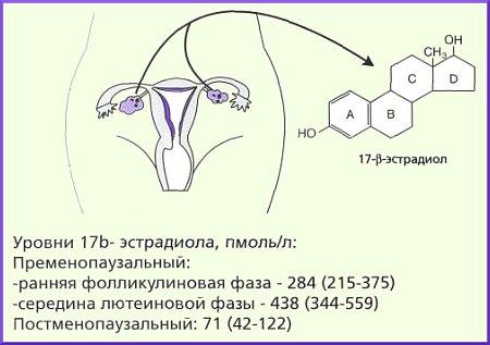 эстрадиол при менопаузе