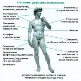 мужские половые гормоны