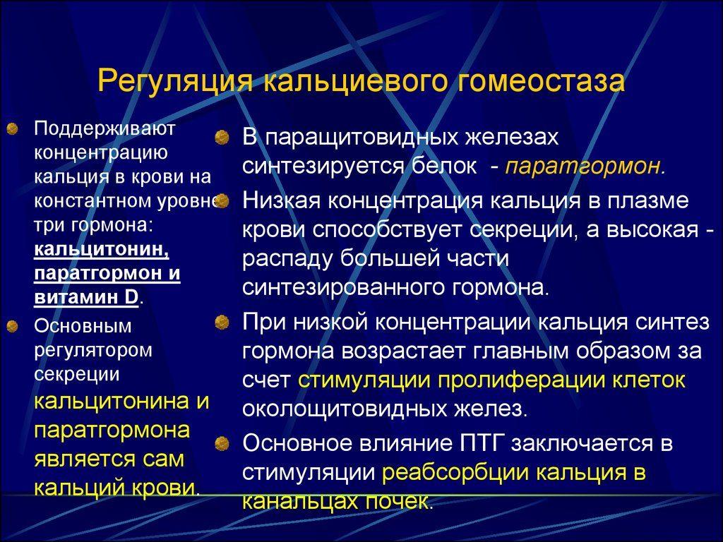регуляция паратгормона в организме
