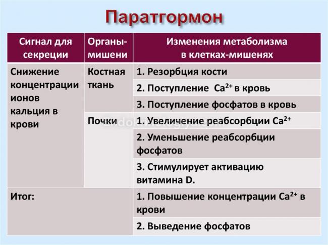 гормон паратгормон