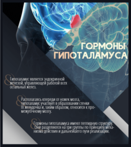 гормоны гипоталамуса