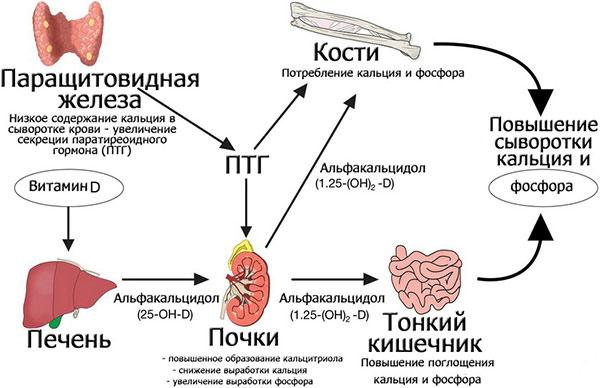 патология паращитовидных желез