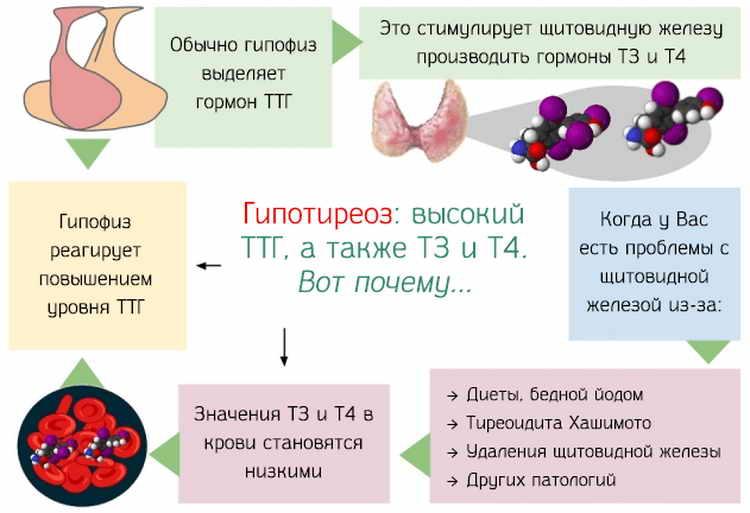 беременность при гипотиреозе щитовидной железы