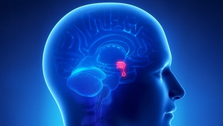 избыток гормонов гипофиза