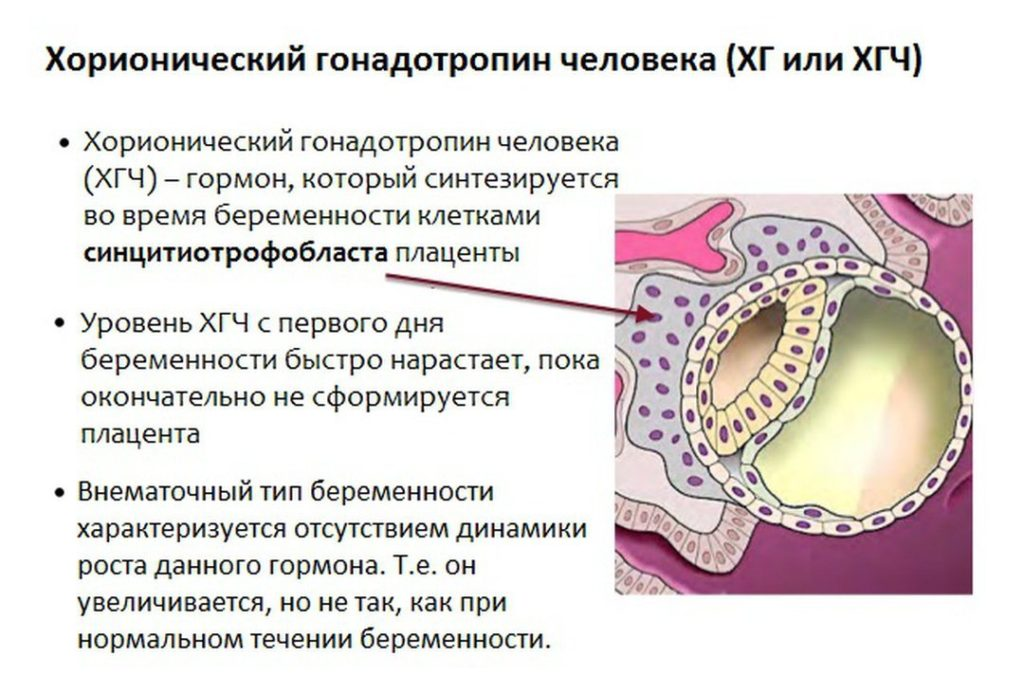хорионический гонадотропин человека