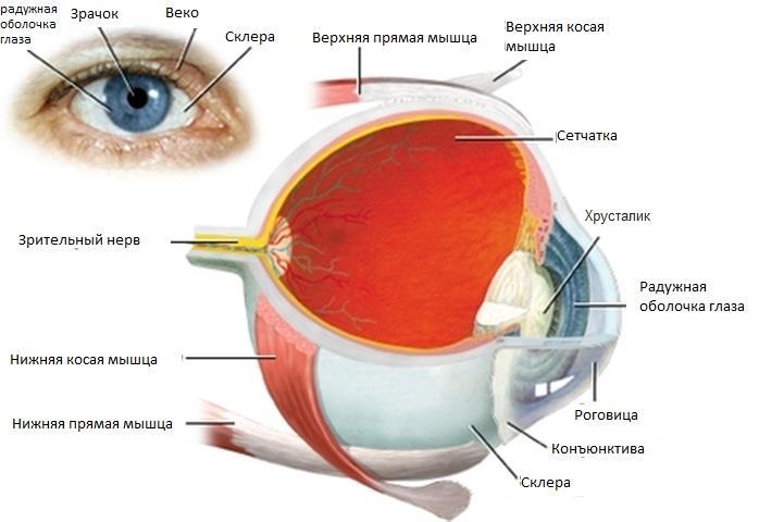 диабетическая ретинопатия и проявления