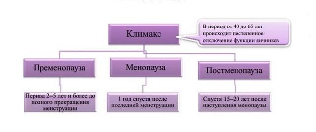 климакс и его стадии