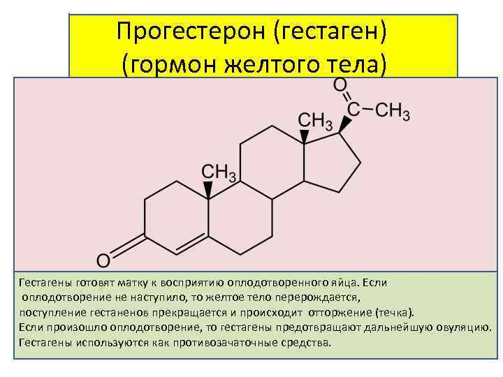 действие гормона гестаген