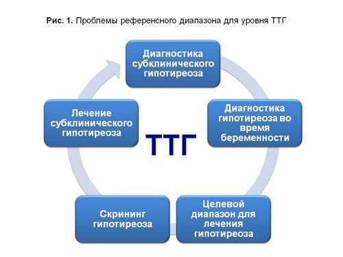 уровень ТТГ и его значение