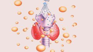функции тиреотропного гормона