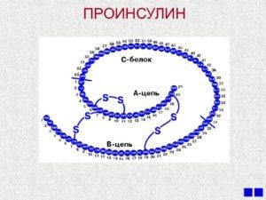 проинсулин у человека