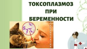 токсоплазмоз при беременности и его симптомы