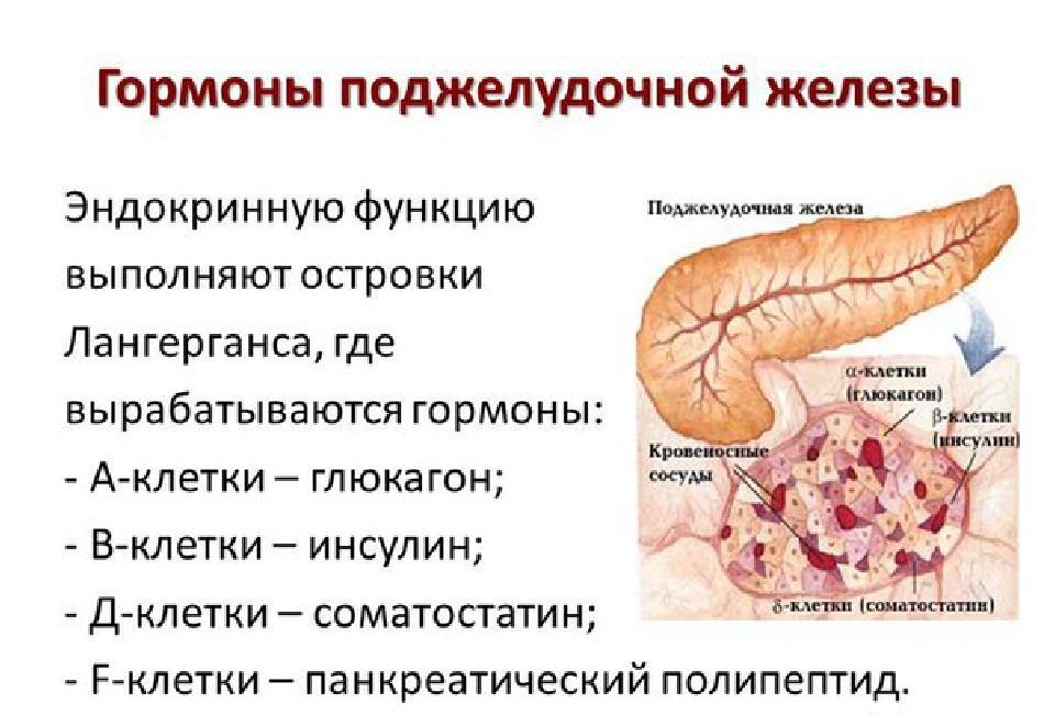 глюкагон поджелудочной железы
