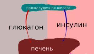 глюкагон как гормон ПЖ