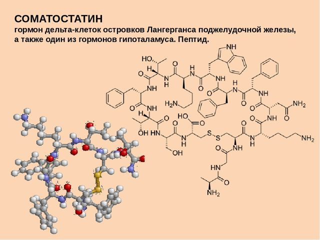 соматостатин действие функции