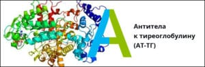 значение антител к тиреоглобулину