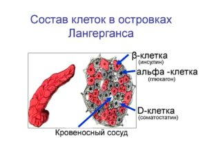 соматостатина функции