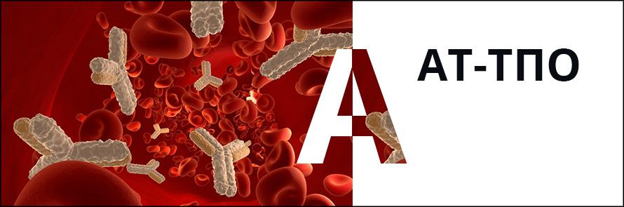 антитела к тиреопероксидазе щитовидной железы или АТ-ТПО