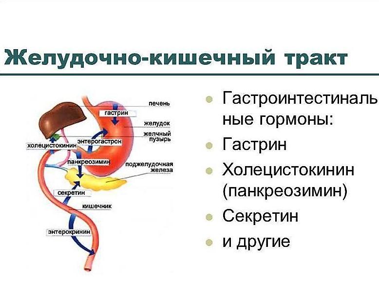 действие панкреозимина на ЖКТ