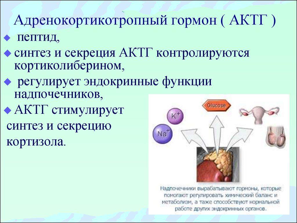 адренокортикотропный гормон гипофиза