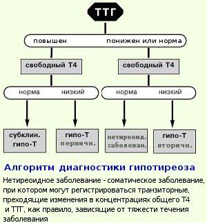 субклинический гипотиреоз и ТТГ