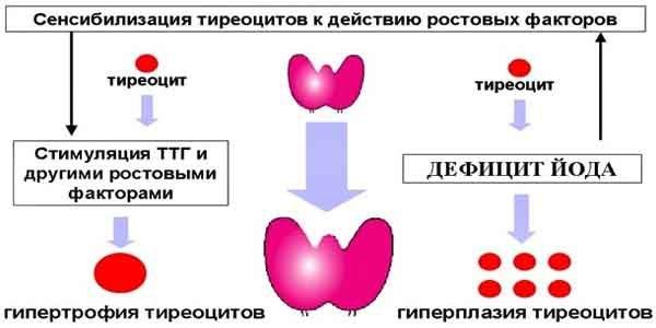 гормоны ЩЖ