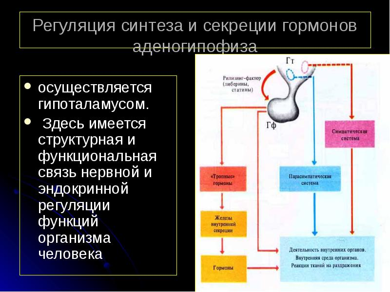 гормоны аденогипофиза и нейрогипофиза