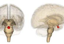 гормоны аденогипофиза и их действие