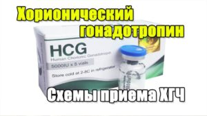 прием гонадотропина