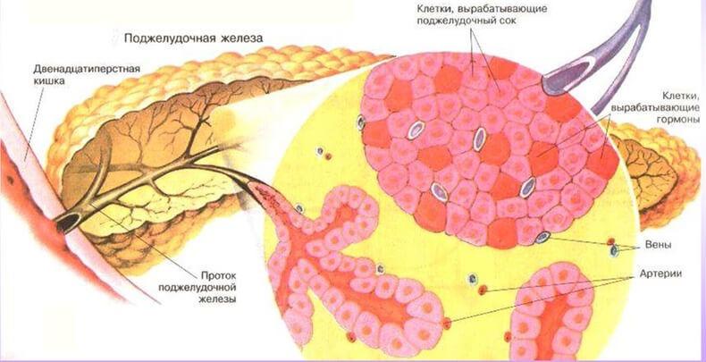 процесс жирового обмена в организме