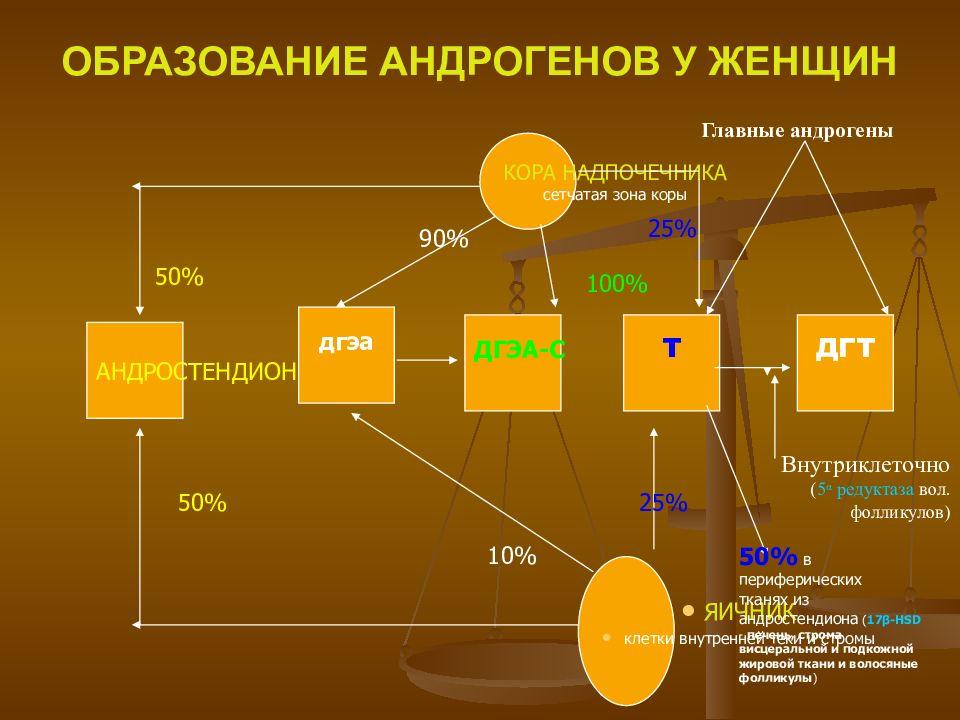 процесс образования андрогенов у женщин
