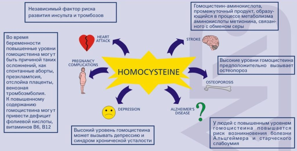 изменение показателей гомоцистеина